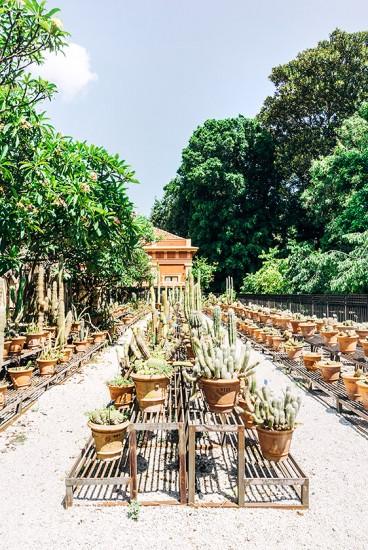 Botanischer Garten | 25h in Palermo, Stilnomaden